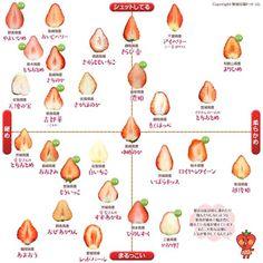 全国のイチゴ28品種を一発で見分ける一覧図が永久保存したくなるレベル! - FEELY