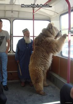 Taking Your Bear For A Ride