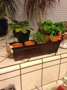 Project : I started an indoor herb garden this week. I'm growing basil and thyme. The aroma in my kitchen is nice. I used the fresh herbs in minestrone soup and it was delicious.