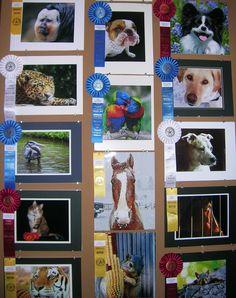 Photo display case/animals, 2012