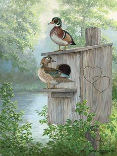 misty-hideaway-wood-duck-painting-by-persis-clayton-weirs-A925495605.jpg