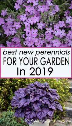 The Best New Perennials and Shrubs For 2019 I love these new perennial varieties that will be available in Some have beautiful flowers while others have gorgeous leaves, some grow in the sun while others like the shade, and there are even some re-blo Part Shade Perennials, Best Perennials, Flowers Perennials, Shade Plants, Planting Flowers, Flower Gardening, Perennial Flowers For Shade, Purple Perrenial Flowers, Full Sun Perennials