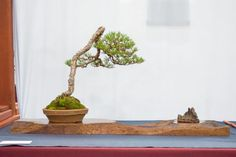 Deciduous bonsai and creative displays at the 5th National Bonsai Exhibition…