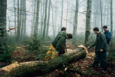 Log buying in the Vosges Forest of France French Oak, France, Stuff To Buy, French