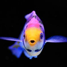 Friday check. Long weekend check. Cute fish check.  Thanks to Sara for this awesome picture #marinedepot #happyreefkeeping