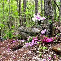 Ramsey Creek Preserve Natural Burial Ground in upstate South Carolina