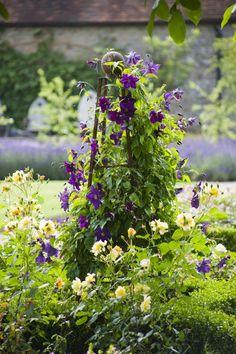 Clematis - The Walled Garden at Cowdray, Clive Nichols Garden Photography Purple Clematis, Clematis Vine, Unique Gardens, Beautiful Gardens, Garden Trellis, Garden Plants, My Secret Garden, Edible Garden, Garden Styles