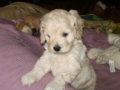 Ludde Cute Animals, Dogs, Photos, Pretty Animals, Pictures, Cutest Animals, Pet Dogs, Cute Funny Animals, Doggies