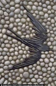 Resultado de imagen de pebble mosaic