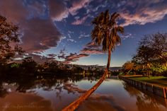 Leaning Palm ... :)