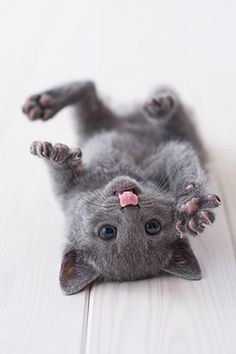 cute kitten #evil #Bad #NSFW