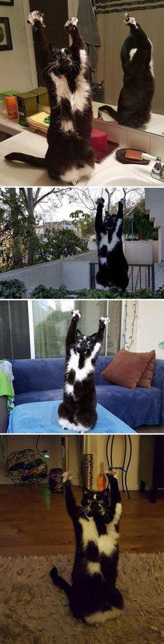 20 razões pelas quais gatos não podem ser desse mundo