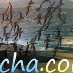 TurismoenRocha Uruguay Tourism, Fun Cooking, Moose Art, Tours, Painting, Painting Art, Paintings, Painted Canvas, Drawings