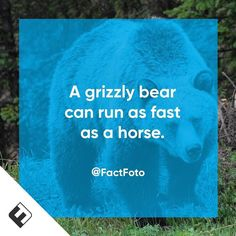 #factfoto #fact #grizzlybear