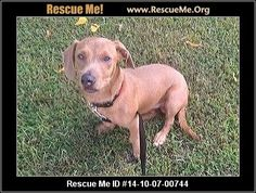 Ramsey ramsey nj southern paws nj rescue die help repin share rescue
