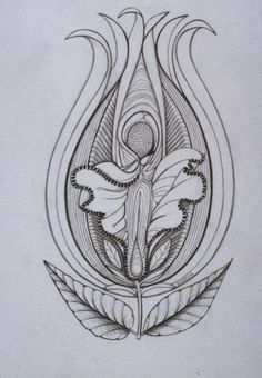 vulva illustration