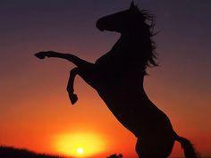 caballos-salvajes-atardecer.jpg