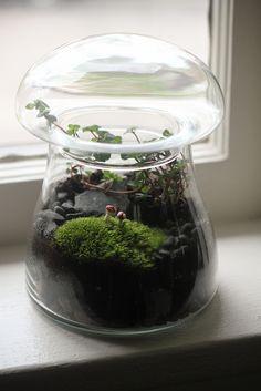 Mushrooms in Mushroom Terrarium Closeup: