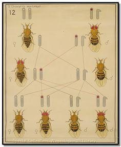 Zoological and entomological wallcharts : varia. [1900-1950]