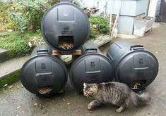 Resultado de imagen de refugios para gatos