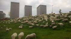 Rotterdam Marconiplein