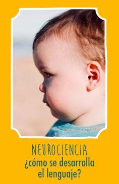 El aprendizaje del lenguaje es un momento maravilloso en el crecimiento y desarrollo del niño. A los 12 meses, el bebé comienza a decir sus primeras palabras, y a 2 años es capaz de construir pequeñas frases. Desde el punto de vista de la neurociencia, ¿qué ocurre en el cerebro del bebé? El lenguaje es un sistema extremadamente complejo. Si el niño comienza a decir palabras a 12 meses es sin duda porque los ha aprendido en su primer mes de vida. Pero ¿cómo?