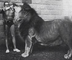 Simba the Barbary Lion, with his owner Nyoka at Colchester zoo,  UK. Photo taken in 70's.