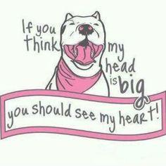 La puritita verdad! Son los perros más nobles, más entregados a su dueño. Ellos dan la vida por nosotros sus amos, por ello el cuidado de tener un Pit Bull.- Pit bull Hearts