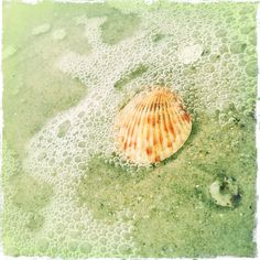 Shell and seafoam, Atlantic Beach, NC