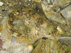 171 best rock pools uk images natural pools rock pools aquarium