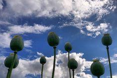 Overkliga blommor 😵  #österlen #mittkivik #fridensgårdskrog #skåne #sweden #visitskane #visitsweden #visitystadösterlen #visitösterlen #enjoyskåne #enjoysweden #swedishmoments #igscandinavia #igsweden  #swedenimages #ig_photooftheday #sweden_photolovers #instadaily #daily #nature #naturephotography #photooftheday #summer #instagood #flowers #sky #clouds #garden #gardens