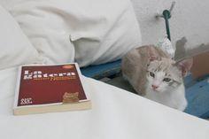 Twitter / murielvillanuev: #lagatera de @LaiaVidEs Twitter, Cats, Animals, Gatos, Animales, Animaux, Animal, Cat, Animais