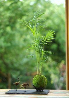 苔玉は、有田焼など伝統的な焼き物の鉢や器と組み合わせる楽しみ方もあります。無限の広がりを持つ小宇宙に遊んでみましょう。