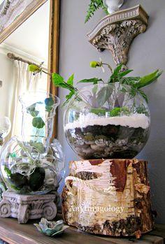 Anythingology:  terrariums