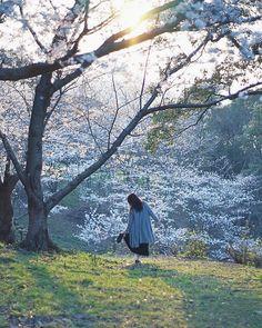 タックルさんはInstagramを利用しています:「* * 仕事が早く終わったので桜の下見🌸 撮るつもりなかったけど光も綺麗だったしなんとなく1枚📸 明日はいっぱい撮りたいなー🌸 * * * #indy_photolife  #indies_gram  #reco_ig  #pics_jp  #hueart_life…」