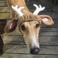 Crochet hat for dog