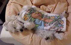 White Westhighland Terrier Trixie  Trixie beim Relaxen       Mehr lesen: http://d2l.in/6l  dogs2love - Gassi gehen zum Verlieben. Partnerbörse für alle, die Hunde lieben.  Bild, Dating, Foto, Hund, Single