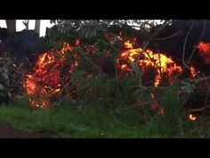 Hawaii Lava Flowing Over Noni Farms Road Now. Puna Family Vlog just uploaded her video. She gets up close to the lava. Weather Alerts, Lava Flow, Farms, Hawaii, World, Youtube, Plants, Homesteads, The World