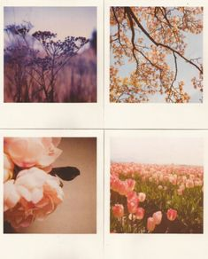 the seasons of a beautiful life. gentle, flourishing, graceful, joyful.