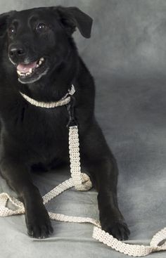 Free crochet Dog Leash & Collar pattern using crochet nylon