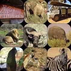 Aquila Safari