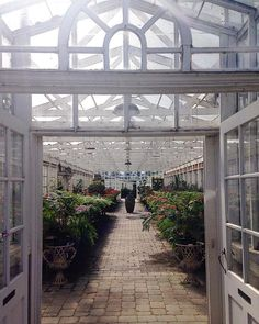 Dreamland. #nursery #skagitvalley #plants #flowers #greenhouse