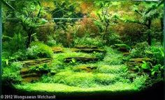 bonsai aquascape - Google Search