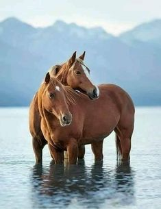 Beautiful horses in this perfect setting. Beautiful horses in this perfect setting. All The Pretty Horses, Beautiful Horses, Animals Beautiful, Cute Horses, Horse Love, Horse Photos, Horse Pictures, Equine Photography, Animal Photography