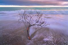 Driftwood by Giovanni Allievi