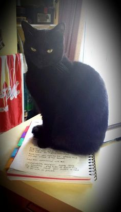 Pet Fursday - Lola is particularly good at sitting on notebooks and walking over the keyboard - http://www.workfromhomewisdom.com/2014/12/11/pet-fursday-name-lola/
