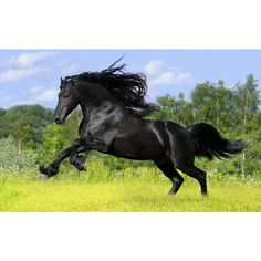 Black horse Desktop wallpapers 1920x1200 ❤ liked on Polyvore