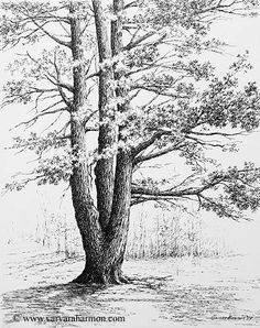 Varvara Harmon Artist and Illustrator Original Paintings Pen Pencil Drawin Tree Sketches, Drawing Sketches, Art Drawings, Sketching, Landscape Drawings, Realistic Drawings, Illustrator, Pen Art, Painting & Drawing