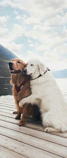 Mister Woof Loves... Dog couple #dogs