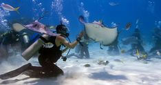 Spectacular Dive Sites You Have to See to Believe Stingray City - Grand Cayman, Cayman Islands - 10 Best Scuba Diving Sites in the Caribbean Grand Cayman Island, Cayman Islands, Scuba Destinations, Family Destinations, Romantic Destinations, Stingray City Grand Cayman, Best Scuba Diving, Cruise Vacation, Vacations